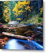 Fall In Bulgarian Forest  Metal Print