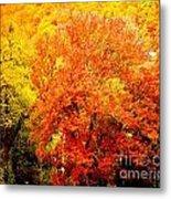 Fall In Full Bloom Metal Print