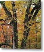 Fall In Kentucky Metal Print