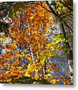 Fall In Nh 2 Metal Print