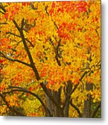 Fall In Pennsylvania Metal Print