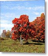 Fall In The Pastures Metal Print