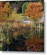 Fall In The Wetlands Metal Print