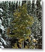 Fall Into Winter Metal Print