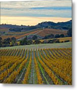 Fall In Wine Country Metal Print