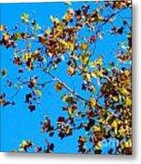 Fall-ing Leaves Metal Print
