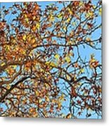 Fall Is Here Metal Print