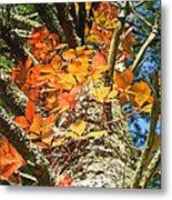 Fall Ivy On Pine Tree Metal Print