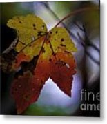 Red And Yellow Maple Leaf Metal Print