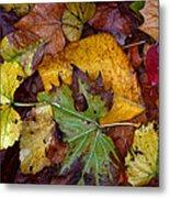 Fall Leaves 1 Metal Print