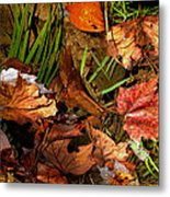 Fall Leaves 5 Metal Print