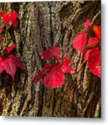 Fall Leaves Against Tree Trunk Metal Print