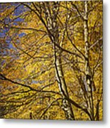 Fall Leaves And Trees In West Michigan No171 Metal Print