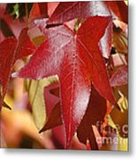 Fall Leaves I Metal Print
