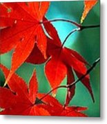 Fall Leaves In All Their Glory Metal Print
