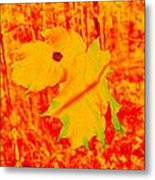 Fall Maple Metal Print