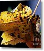 Fall Maple Leaf Metal Print