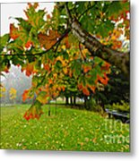 Fall Maple Tree In Foggy Park Metal Print by Elena Elisseeva