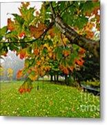 Fall Maple Tree In Foggy Park Metal Print