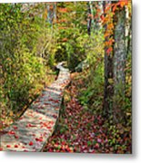 Fall Morning Metal Print by Bill Wakeley