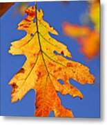 Fall Oak Leaf Metal Print