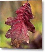Fall Oak Leaf Metal Print