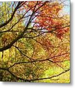 Fall Outstretched Metal Print