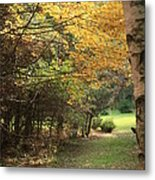 Fall Path Metal Print