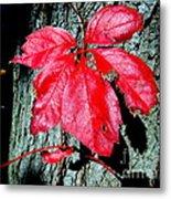 Fall Red Leaf Metal Print