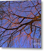Fall Reflections By Diana Sainz Metal Print