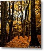 Fall Scene In Bidwell Park Metal Print