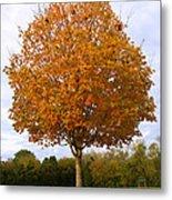Fall Sugar Maple Metal Print