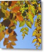 Fall Time Metal Print