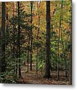 Fall Trail Metal Print