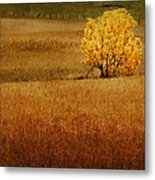 Fall Tree And Field #1 Metal Print