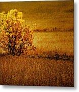Fall Tree And Field #2 Metal Print