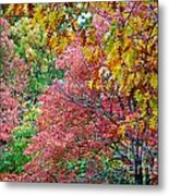 Fall Tree Leaves Metal Print