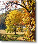Fall Trees 4 Of Wnc Metal Print