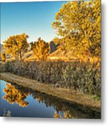 Fall Trees Metal Print