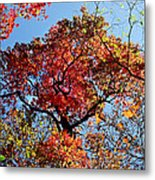 Fall Trees Of Wnc Metal Print