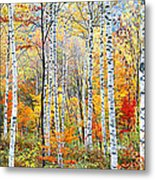 Fall Trees, Shinhodaka, Gifu, Japan Metal Print