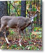 Fall Trophy Buck Metal Print