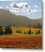 Fall Vineyards 2 Metal Print
