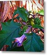 Fall Wild Flower Purple Bloom Metal Print by Brittany Perez