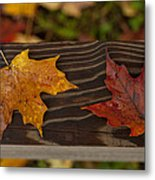 Fallen As If Placed Metal Print