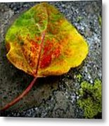Fallen Autumn Aspen Leaf Metal Print
