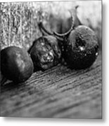 Fallen Berries Metal Print