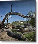 Fallen Dead Torrey Pine Trunk At Torrey Pines State Natural Reserve Metal Print