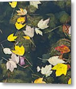 Fallen Leaves 2 Metal Print