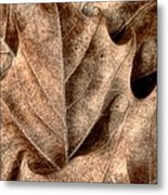 Fallen Leaves I Metal Print